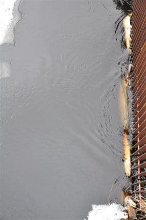 Död ål vid kraftverksgaller